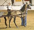 Hackney Pony3.jpg