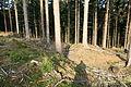 Halver - Bollberg - Wallburg 09 ies.jpg