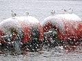 Happy Gulls at Beeston Weir - geograph.org.uk - 1155741.jpg