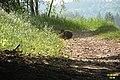 Hare (NH Kra) (22195038958).jpg