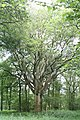 Harewood Forest - geograph.org.uk - 17424.jpg