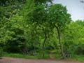 Hasenheide rixdorfer-hoehe 2021-06-06.png