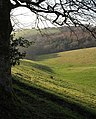 Head of the Batt's Brook valley - geograph.org.uk - 690891.jpg