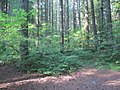 Heading back toward lowland forests on west side of Cascades (7967339664).jpg