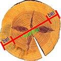 Heartwood and sapwood in pinus sylvestris.jpg