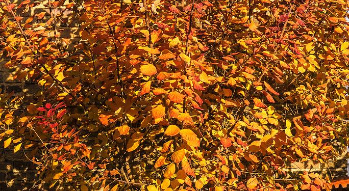 Herbst141120-006.jpg