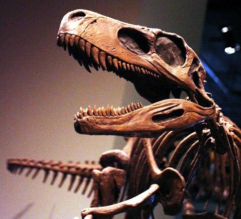 Mounted skeleton cast of Herrerasaurus ischigualastensis leaping forward with open jaws.