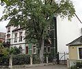Hilgardstrasse 24 Speyer.jpg