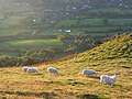 Hillside, Caer Caradoc - geograph.org.uk - 1006485.jpg