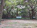 Historic Banyan Tree.jpg