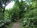 Hokkaido University botanical garden forest.JPG