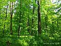 Holodny Yar forest 05.jpg