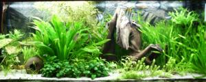 240 litres aquarium with different fishes, pla...