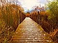 Horizon Bridge.jpg