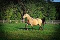 Horse in Field (11967919636).jpg