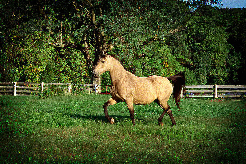 File:Horse in Field (11967919636).jpg
