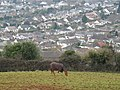 Horse on Great Hill, Torquay - geograph.org.uk - 1716485.jpg