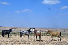 Horses3