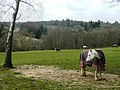 Horses at Buckholdhill Farm - geograph.org.uk - 746143.jpg