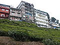 Houses by the Tea plantations, Darjeeling.jpg