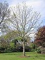 Howard Davis Park Cold War memorial tree Jersey b.jpg
