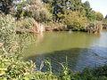 Hungary, Gyömrő, Tőzeges tó 01.JPG