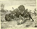 Hunting and trapping stories; a book for boys (1903) (14595803658).jpg