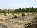 Huta-Mezhyhirska forest nursery3.JPG