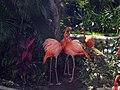 Iberostar flamingos - panoramio.jpg