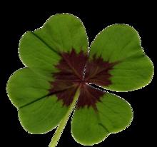 comment trouver trefle 4 feuilles