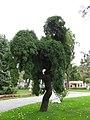 Ihlamur Palace Garden 10.jpg