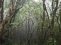 Ilha das Flores P5290312 (35839628132).jpg