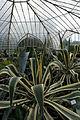 In Nationale Plantentuin van België Jardin Botanique (5771074725).jpg