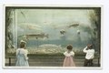 In the Aquarium, Belle Isle Park, Detroit, Mich (NYPL b12647398-69612).tiff