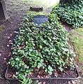 Invalidenfriedhof, Grab Heinrich von Bünau.jpg