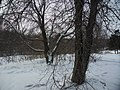 Irkutsk. Akademgorodok. February 2013 - panoramio (143).jpg
