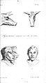 J.C. Lavater, L'Art de connaitre les hommes... Wellcome L0025302.jpg