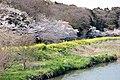 JP-12 Chiba Hanashima park.jpg