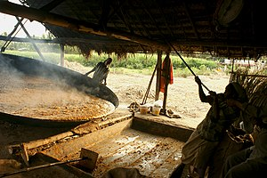 Muscovado - pouring molasses for granulation by shearing