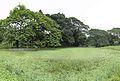 Janardan Lake - Indian Botanic Garden - Howrah 2013-10-27 3868-3920.JPG