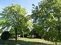 Jardin public de Mortagne-sur-Gironde.JPG