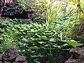 Jardin verde.jpg