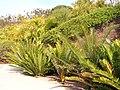 Jardinbotanique1.JPG