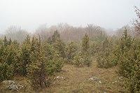 Jasovska planina.jpg
