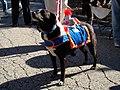 Joust dog (1701220477).jpg