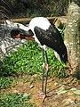 Jurong BirdPark 184.JPG