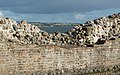 Kalø Slotsruin (Syddjurs Kommune).Mur.1.125359.ajb.jpg