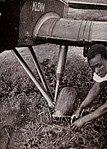 Karl Schwabe, 3 x Afrika (128b).jpg