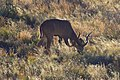 Karoo National Park 2014 53.jpg