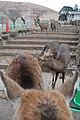 Kasuganocho, Nara, Nara Prefecture 630-8212, Japan - panoramio - jetsun (25).jpg